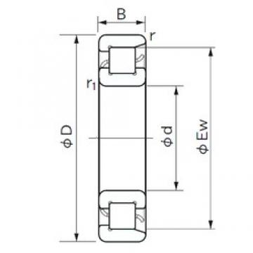 NACHI NF 1064 cylindrical roller bearings